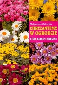 chryzantemy-w-ogrodzie-i-ich-bliscy-krewni-b-iext8578837